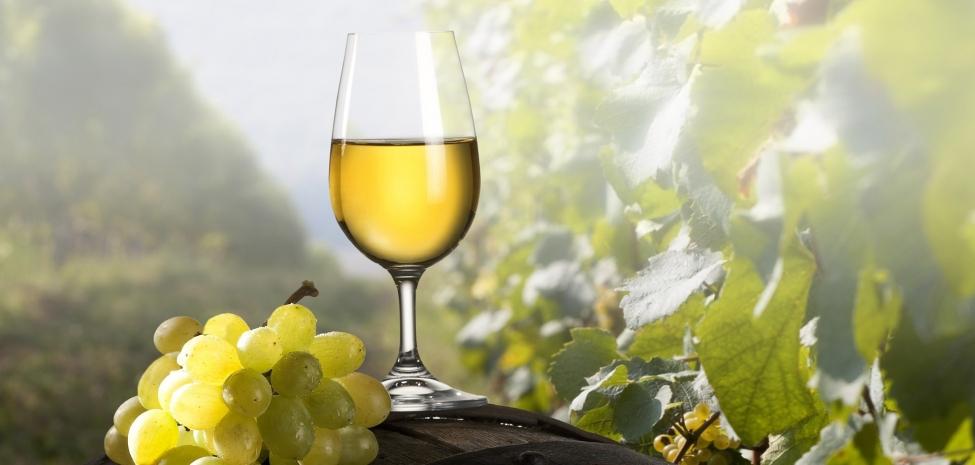 მომავალი წლიდან ღვინის ხარისხის კონტროლი გამკაცრდება