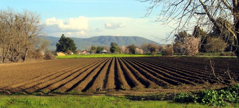 უცხოელებს საქართველოში 5-დან 100 ჰა-მდე მიწის შეძენა შეეძლებათ