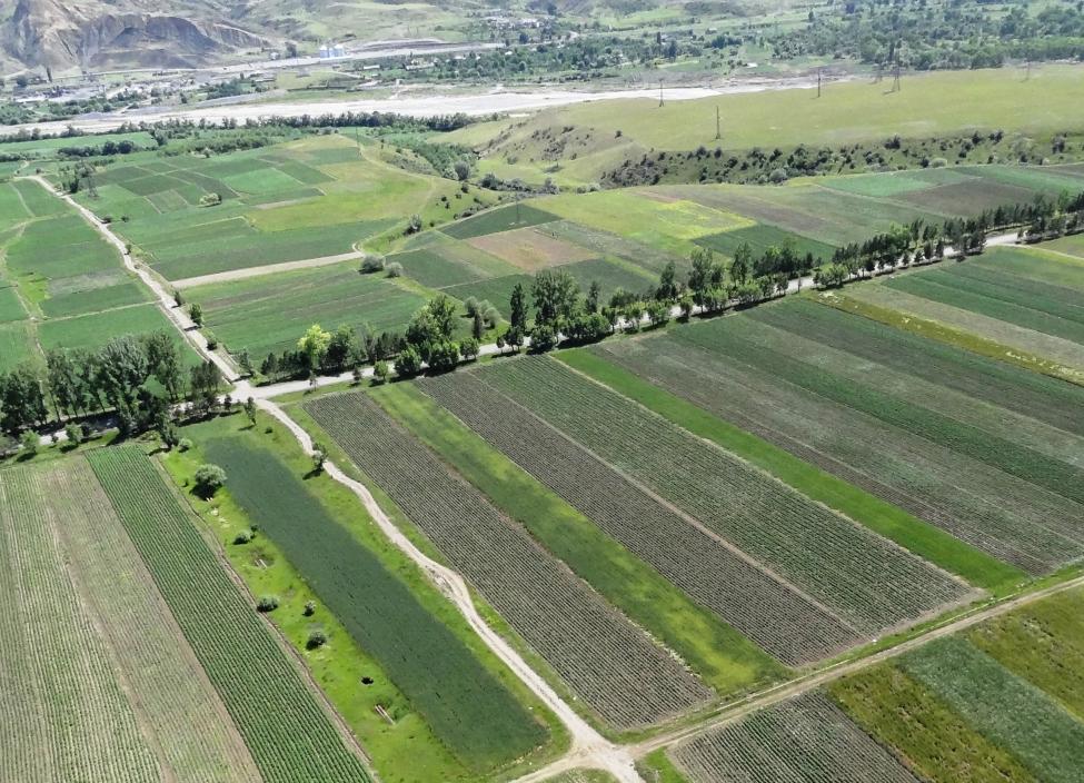აღმოსავლეთ ევროპის ქვეყნებმა მიწის გაყიდვაზე მკაცრი რეგულაციები დააწესეს
