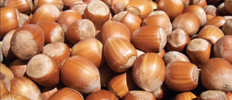Georgia Will Soon Compete with Turkey in Hazelnut Production