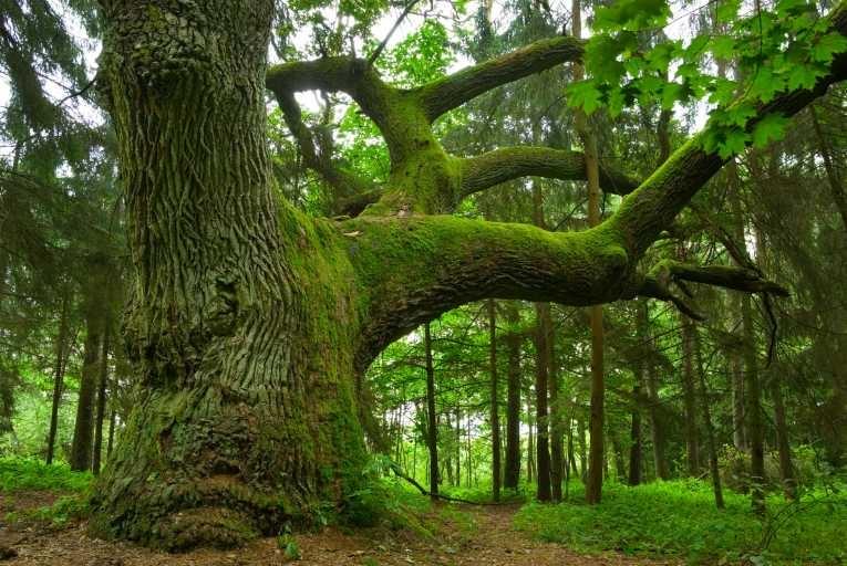 ტყის ახალი კოდექსის გამოწვევები და რეგულაციები