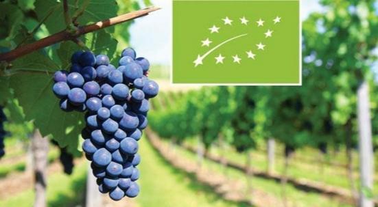 ბიო ღვინო- ნიშური ბაზრიდან მთავარ სეგმენტამდე