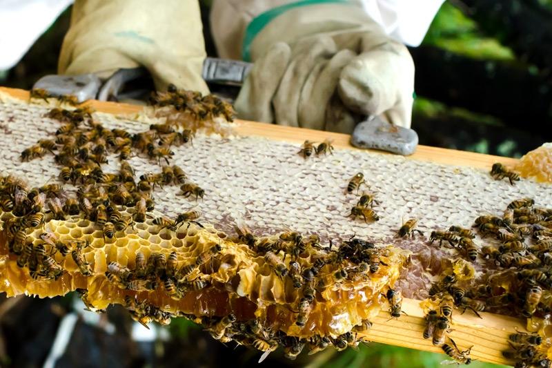ევროკავშირი ქართული თაფლისთვის აკრძალული ნივთიერებების ნუსხას წლის ბოლომდე დააზუსტებს