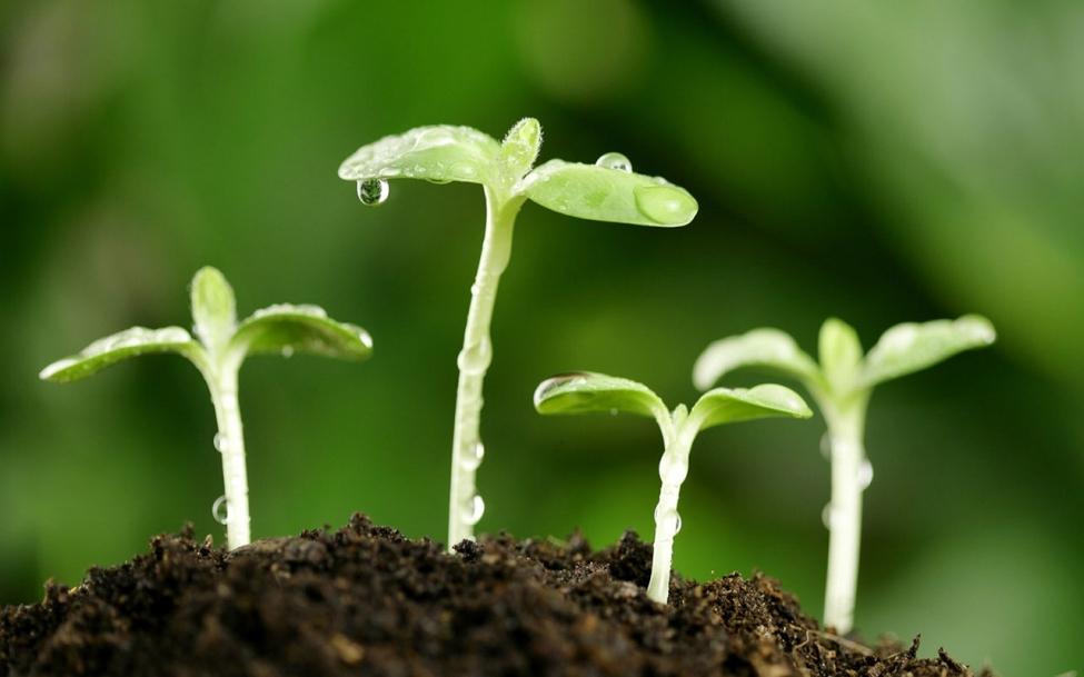 100,000 лари на закладку черешневого сада – результаты проекта «Внедри будущее» будут подсчитаны через несколько лет