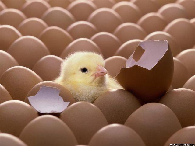 კვერცხისა და ქათმის ხორცის მიწოდების  დამატებული ღირებულების გადასახადით  დაბეგვრის გაუქმების მიზანშეწონილობის შესახებ
