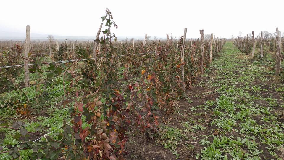 უწყლობის გამო კახეთში ფერმერებს ნარგავები უფუჭდებათ