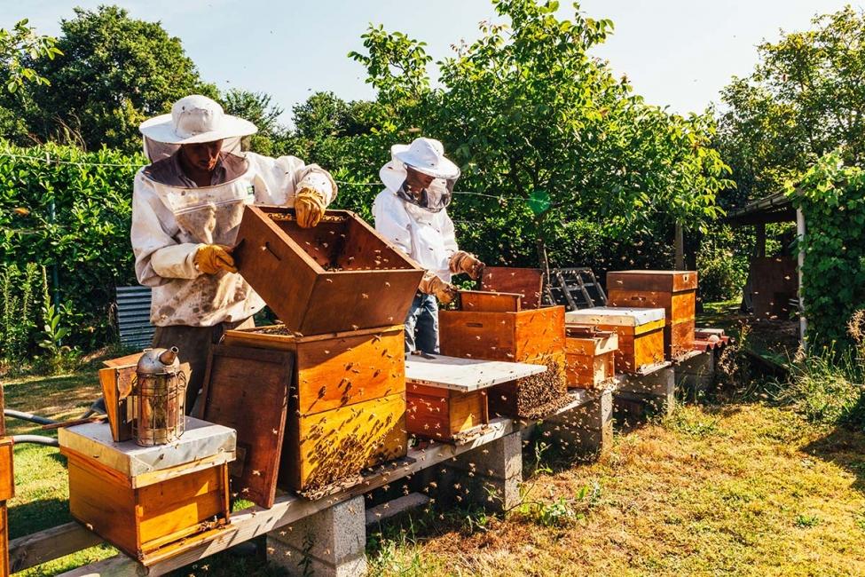 თაფლის წარმოება და გამოწვევები საქართველოში