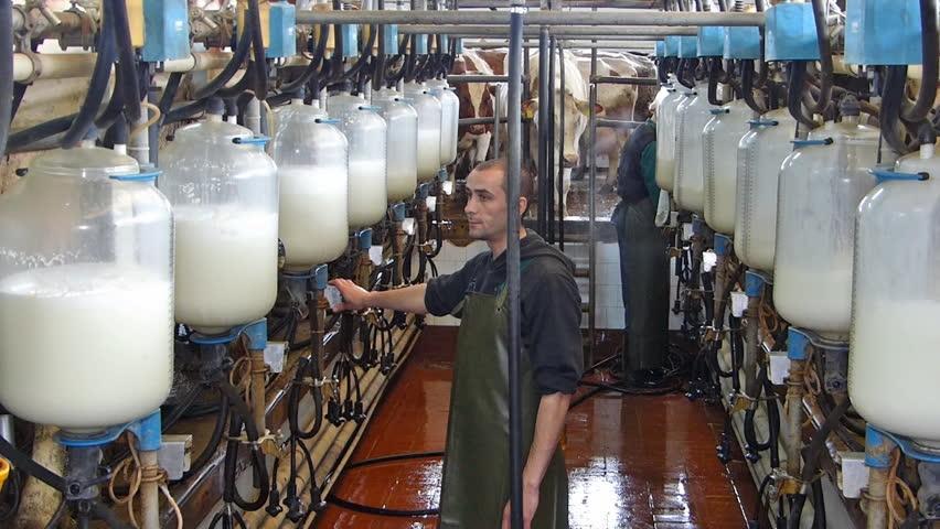 http://eugeorgia.info/uploads/video_news/საქართველოში კავკასიის პირველი რძის კონგრესი გაიმართება