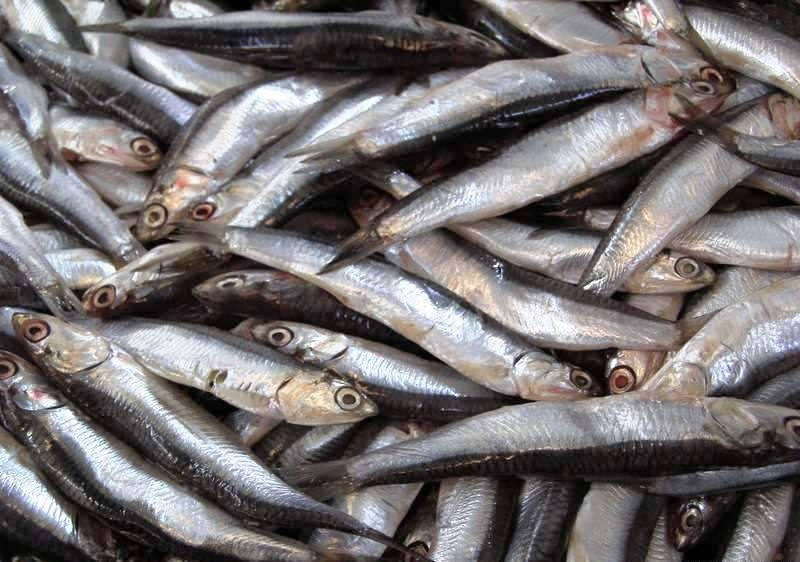 ფოთში თევზის კომბინირებული საკვების ქარხანა აშენდება