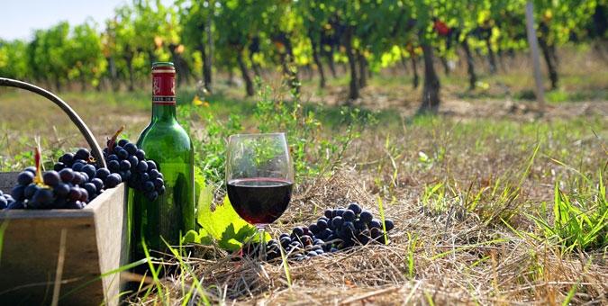 ღვინის ექსპორტი ევროკავშირის ქვეყნებში გაიზარდა