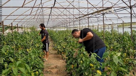 ოფშკვითელ ფერმერებს მოსავლის რეალიზაციის პრობლემა აქვთ